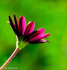 Blumen und mehr (Fotoamsel) Tags: natur pflanzen blumen garten hdr