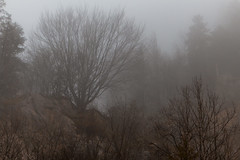 wreathed in mist