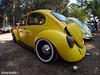Volkswagen Type 1 Beetle