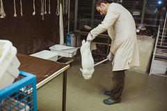 IMG_8087 (ODPictures Art Studio LTD - Hungary) Tags: rabbit canon eos major report biotech peter research magyar biology orban hungarian 6d 2014 godollo riport domonkos odpictures orbandomonkoshu odpictureshu kutatointezet biotechnologiai