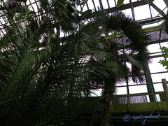 Tropical vegetation in the greenhouse of Bucharest Botanical Garden (cod_gabriel) Tags: flora greenhouse romania jardimbotnico tropical vegetation bucharest hortusbotanicus bucuresti rumania romenia romnia bukarest roumanie jardnbotnico  ortobotanico boekarest bucarest romnia botanischergarten  romanya rumnien roemeni rumnien  rumana romnia bucureti  bucharestbotanicalgarden rumunia ogrdbotaniczny  romnia botanisktrdgrd botanikbahesi  bucareste     rumunjska      grdinabotanicbucureti  kebunbotani
