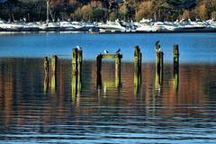 observers (Dave Trott) Tags: scotland lochlomond paddlesteamer maidoftheloch