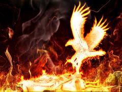 MAMA FENIX (David A.E.) Tags: phoenix photoshop fire fenix fuego psd humo cs5