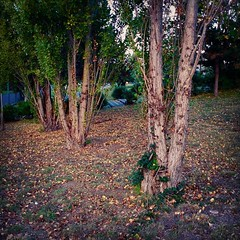 Ogni tanto si prende il tempo... (simoneaversano) Tags: autumn trees greenleaves fall nature leaves garden woods backyard poetry flowerbed poesia redleaves fallenleaves dryleaves naturephotography naturelovers flowerbeds treeporn treelovers carpetofleaves poetography spiritofautumn woodlovers autumnlovers latergram uploaded:by=flickstagram igwildplace walkingbenevento instagram:venuename=aziendaospedalieragaetanorummo instagram:venue=1269910 instagram:photo=842259785487685258247096476