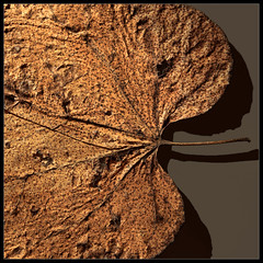 It's Time to Turn Over Your Old Leaf (ioensis) Tags: new turn happy leaf over january mo missouri resolution years webster groves 2015 jdl ioensis 93151b itstimetoturnoveryouroldleaf