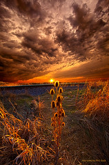 Of Wonders Lost Watermark (Phil~Koch) Tags: park morning blue autumn trees winter sunset red summer portrait sky orange sun mist snow flower tree green art fall love nature floral field leaves lines yellow vertical fog wisconsin clouds sunrise season landscape photography dawn office twilight ray peace shadows earth farm horizon perspective scenic meadow inspired naturallight farmland beam photograph crop environment serene wildflowers agriculture inspirational horizons farmfield philkoch