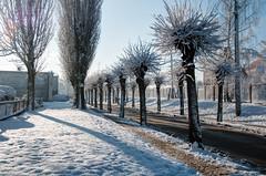 _DSC7823_4_5HDR (skruk) Tags: snow poland zima 2014 nowe gwiazdka snieg