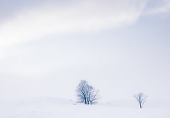 Winter Trees. (katemortoncp) Tags: trees winter snow cold landscape scotland scenery moody scottish mysterious remote icy atmospheric isolated rannochmoor