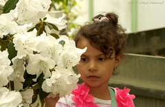 Portrait (Natali Antonovich) Tags: flowers portrait belgium belgique belgie blossom stare tradition royalgreenhouses royalgreenhousesbrussels