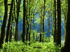 Spring in Baker River Valley (Ramona H) Tags: blue trees green nature forest outdoors spring calm trail serene northcascades bakerriver