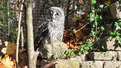DSC_0368 (d90-fan) Tags: autumn animals tiere herbst hirsch braunbr brownbear geier waschbr wolfes luchs badmergentheim wlfe