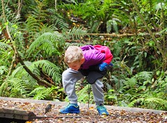 Robin Close Encounter! (dougnewdick) Tags: bird robin animal child encounter zealandia