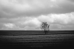Einsamer Baum (Rauschverteilung Fotografie) Tags: blackandwhite bw tree nature monochrome field landscape heaven minimal