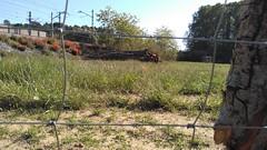 """Preparant el pati per estocar fusta i biomassa <a style=""""margin-left:10px; font-size:0.8em;"""" href=""""http://www.flickr.com/photos/134196373@N08/27249373562/"""" target=""""_blank"""">@flickr</a>"""