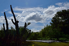 20160614_003_2 () Tags: silhouette