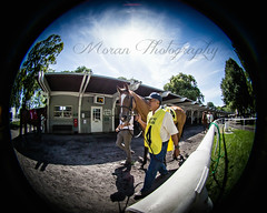 Loon River (EASY GOER) Tags: horse sports race canon racing 5d races thoroughbred equine morley belmontpark markiii