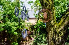 Jingle Dangle! (BGDL) Tags: tree garden windchimes dangle odc nikond7000 afsnikkor18105mm13556g bgdl lightroomcc