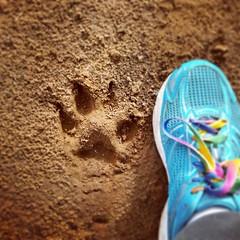 paw print (ameliabeare) Tags: print paw malamute pawprint