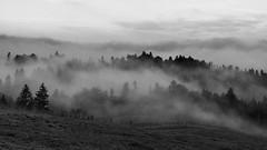 La fort qui fume (MrMyz) Tags: blackandwhite bw mist nature monochrome fog canon eos blackwhite noiretblanc outdoor nb paysage foret arbre brouillard noirblanc doubs exterieur hautdoubs infinitexposure mrmyz