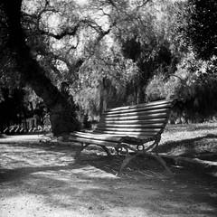 Film: Bench in the Shadows (rafa.esteve) Tags: film ilfordfp4plus125 mediumformat valencia bench 1x1