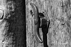Abre la puerta (J.Gargallo) Tags: mosqueruela teruel espaa maestrazgo gudarjavalambre canon canon450d eos eos450d 450d blancoynegro blackwhite blackandwhite bw byn madera tokina tokina100mmf28atxprod