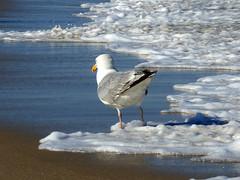 Foamy (Lori Garske) Tags: statepark foam sea ocean beach seagull sandyhook nj lorigarske