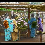 GEISHA AT A FLOWER SHOW thumbnail