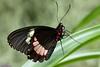 K46A8138 (Yvonne23021984) Tags: schmetterling butterfly hamm germany deutschland maxipark markro photography macrophotography canon canonphotography markofotografy canoneos7dmarkii insects insekten nature naturfotografie naturephotography closeup colorkey schmetterlinge butterflies