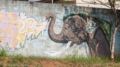 _DSC6019 (Mario C Bucci) Tags: saida fotografia pacheco paulo tellis mario bucci hugo shiraga fabio sideny roland grafites volu ii