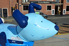 Skipper-D-17-September-2016 (Steve Ellwood Whitley Bay) Tags: greatnorthsnowdogs guidedog mikeclay northshields cliffordsfort ellwood steveellwood skipper joannewishart dfds westernquay fishquay
