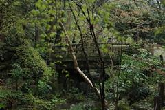 Naritasan Shinsh-ji Park (Toni Kaarttinen) Tags: japan  japonia    jap japonsko jaapan  japani japon xapn    japn jepang an tseapin giappone  japna japonija  japo  japonska japn hapon  japonya nht bn japanese narita naritacity naritatown naritasan shinshji naritasanshinshji park calm tranquillity bridge