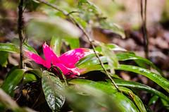 Estao Biolgica Santa Lcia (Rodrigo Borato) Tags: santa brazil macro green nature ecology brasil natureza reserve botanic teresa bromeliad biology santo botanica esprito bromlia ecologia biologic