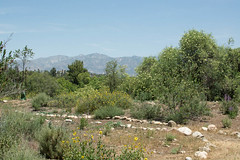 140430_5895_1200px.jpg (Weeding Wild Suburbia) Tags: park gardens places publicgardens spnp