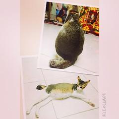 """""""ลงเลแป๊บเดียว กลับมาแมวท้อง"""" #Cat #ใครคือพ่อของเด็ก"""