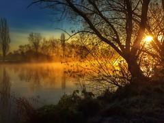 Sonnenaufgang am Main... (hobbit68) Tags: sunset sky misty clouds river sonnenuntergang nebel frankfurt main herbst himmel wolken fluss sonne bltter sonnenaufgang baum sonnenschein