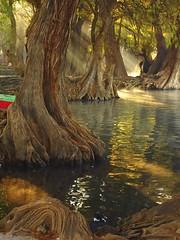 LA LUMIERE (NIKONIANO) Tags: lake water de mexico lakes surreal olympus lumiere lakeview mexicano sabino leau onírico camécuaro sabinos nikoniano tangancícuaro enzamora sergioalfaro tangancícuaromichoacán lugaresdemichoacán camecuaromichoacan waterenvirons aguaazulsergioalfaroromero caminosdemichoacán aguaenméxico enmichoacán sueños