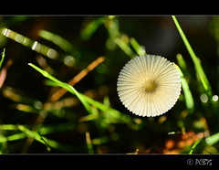 :-) (PCB75) Tags: mushroom mira foret seta champignon pilz setas bosc magia  bolets bolet schwammerl  onddo mgic  goita
