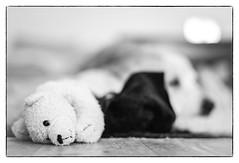 Friends (bilder/images) Tags: leica dog dogs toys 50mm summilux asph m240 summilux50mmasph leicam240