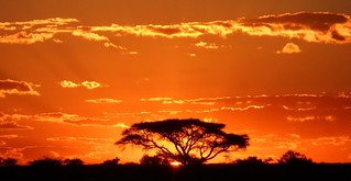 Botswana Hunting Safari 19