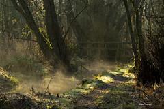 Misty beck (Alan-Taylor) Tags: uk england mist nature sunshine canon woodland stream lancashire rspb 600d sigma120400 rspbleightonmoss