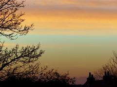 Sunset ( Rosemarie Christina ) Tags: leica november autumn sunset sky tree silhouette lumix silhouettes panasonic pointandshoot minimalism homesweethome fz200 dmcfz200 panasonicdmcfz200