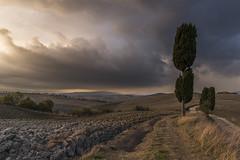 Pienza (misus1504 (Elena)) Tags: trees sky italy landscape r cypress pienza toscana bestcapturesaoi elitegalleryaoi