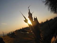 IMG_7152 (deaeberli) Tags: sunset sky sun nature soleil sonnenuntergang autum herbst natur himmel ciel sole blatt sonne leav