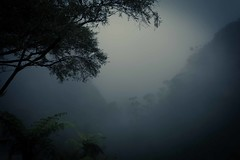 Misty Blue Mountains (jotxam) Tags: mist tree fog forest landscape countryside nebel oz australia bluemountains australien landschaft wald baum downunder dunst meditative nachdenklich blaueberge