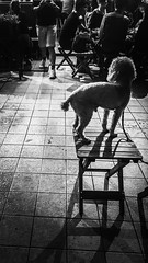 The Street Photographer - 2016 EyeEm Awards Nightphotography Night Lights Light And Shadow Streetphotography Streetphoto_bw Snapshots Of Life Light In The Darkness On The Road Dog Standing Stand Out From The Crowd View From Behind Wooden Chair Legs Lookin (Eugene Kong) Tags: nightphotography dog standing nightlights looking legs candid streetphotography ontheroad lightandshadow lightinthedarkness woodenchair viewfrombehind snapshotsoflife candidportraits eye4photography standoutfromthecrowd streetphotobw thestreetphotographer2016eyeemawards