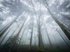 Himmelsstrmer - Olympus OM-D E-M1 (Andreas Voegele) Tags: light forest landscape search shine olympus omd em1 himmelsstrmer andreasvoegelephoto olympusomd omdem1 olympusem1 olympusomdem1