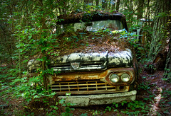 Hiding Out (Todd Evans) Tags: auto ford abandoned car rural forest truck georgia nikon rust automobile rusty wooded oldcarcity d7100