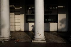 (www.pushkarrajsharma.com) Tags: streetphotography shadowplay streetphotographer moodylight streetphotographydelhi
