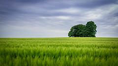 Tree (ppausb87) Tags: tree love clouds germany deutschland spring nikon feld wolken tokina rainy silence passion melancholy baum liebe frhling niedersachsen lowersaxony ruhe leidenschaft tokina1116 nikonflickraward nikond5300