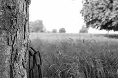 DSC_0636.jpg ([Richard Ford]) Tags: trees field bristol landscape countryside rust gate chain alveston